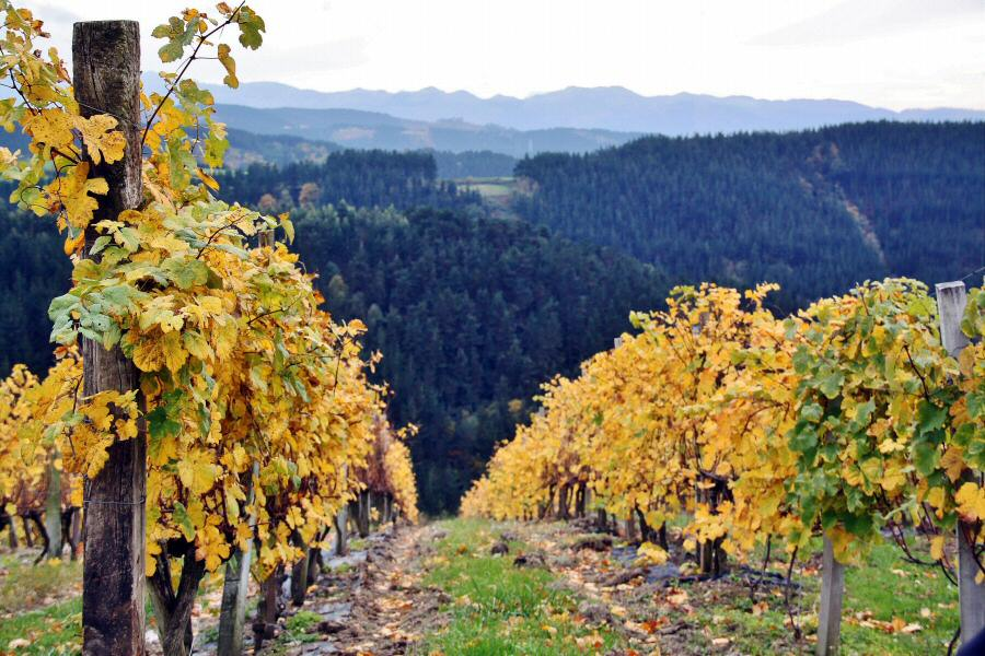 Fall at Bodegas Berroja