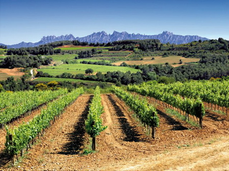 Penedes vineyards at Pares Balta