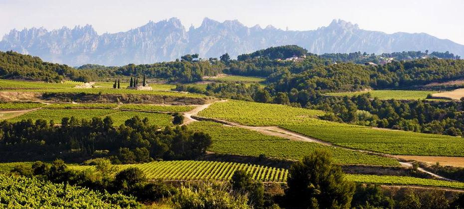 Let Spanish Journeys show you the best of the Penedès wine country