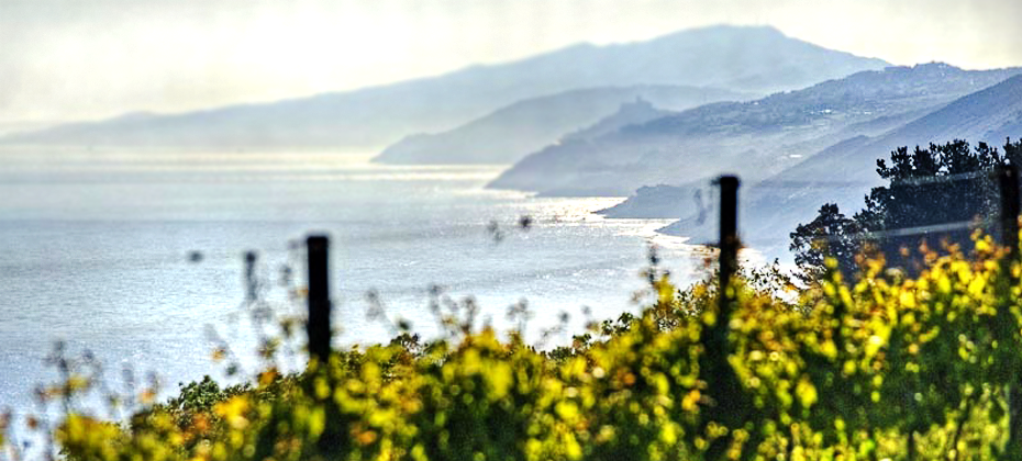 Txakoli Elkano - Basque Coast