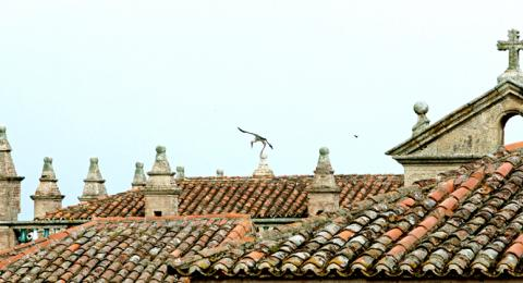 Tile roofs in Caceres on the Spanish Journeys Extremadura Tour