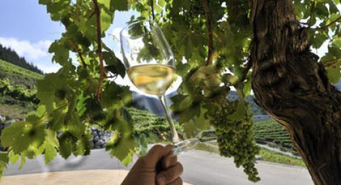 A glass of cold Txakoli